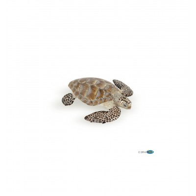 TORTUE CAOUANNE - PAPO